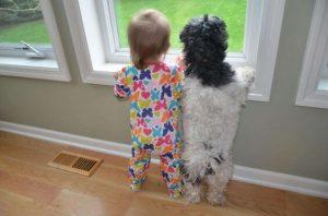Dziecko i pies stoją w oknie