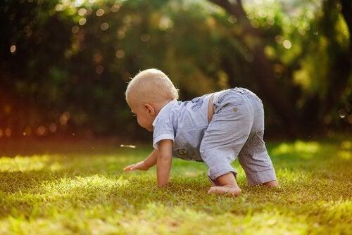 Chłopiec raczkujący w zachodzącym słońcu po trawie