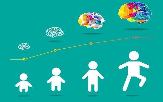Grafika przedstawiająca etapy rozwoju mózgu dziecka