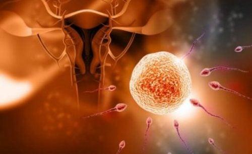5 mitów dotyczących zajścia w ciążę – czy je znasz?