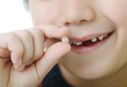 Zęby mleczne – w jakiej kolejności wypadają? Kiedy pojawiają się zęby stałe?
