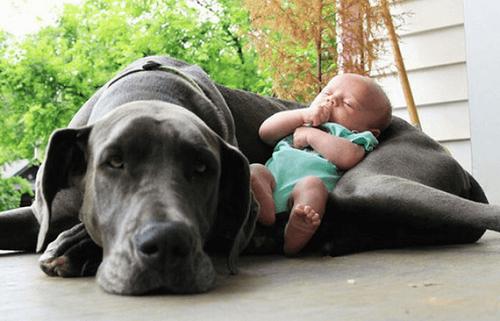 Zwierzęta – jak przygotować Twojego pupila na nowego członka rodziny?