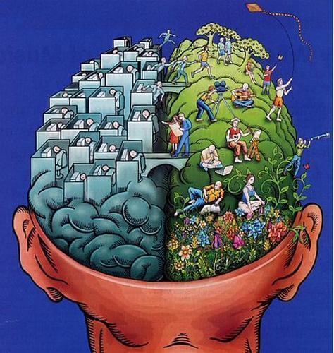 Przekrój mózgu człowieka