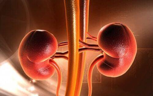 Rak nerki u dzieci: objawy i możliwe przyczyny choroby