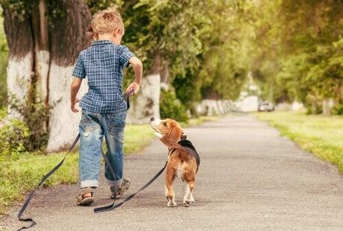 Chłopiec na spacerze z psem w parku